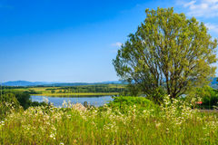 Meadow with wild flowers and a tree in front of the lake. Meadow with wild flowers and a tree on a raised platform in front of the lake Royalty Free Stock Images
