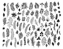 Meadow wild herbs, floral twigs branches silhouettes set Stock Photography