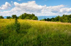 Meadow with wild herbs on top of a hill in summer. Beautiful nature scenery in mountains on a cloudy day Stock Photos