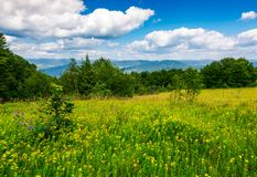 Meadow with wild herbs on top of a hill in summer. Beautiful nature scenery in mountains on a cloudy day Stock Image