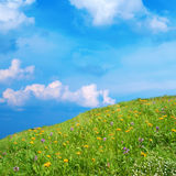 Meadow with wildflowers Royalty Free Stock Photo