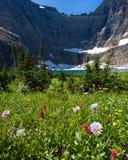 Meadow of Wildflowers at Iceberg Lake, Montana Stock Photography