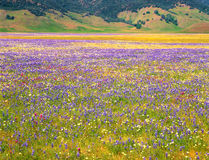 Meadow Wildflowers and Mountains Stock Photos