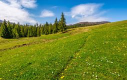 Meadow with wildflowers near forest Royalty Free Stock Photos