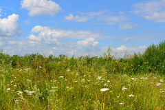 Meadow with wildflowers on  sunny day in July Stock Images