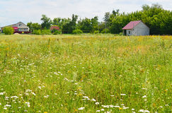 Meadow with wildflowers on  sunny day in July Royalty Free Stock Photo