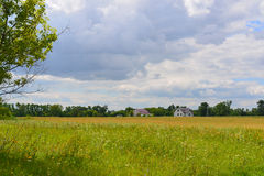 Meadow with wildflowers on  sunny day in July Royalty Free Stock Photos