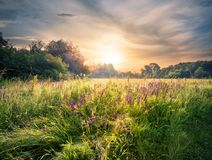 Meadow with wildflowers under the setting sun. Summer landscape Stock Photography