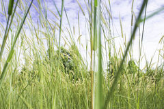 Meadow with wind Royalty Free Stock Photos