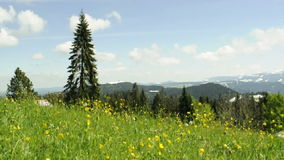 Meadow in wind with view to the alps in Austria. Meadow with buttercups on the top of the mountain Pfander in Austria. View to the Bregenzerwald. loopable stock video