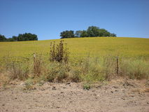 Meadow in wine country. Picture of a meadow in wine country Stock Images