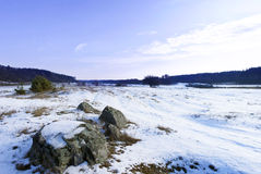 Meadow in a winter Royalty Free Stock Images
