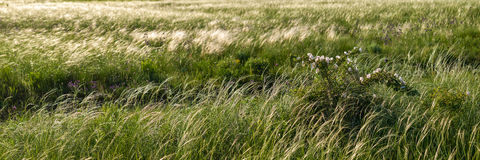 Free Meadow With A Feather Grass Stock Image - 33251911