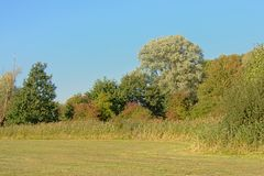 Free Meadow With Reed Trees In Autmn Colors On A Blue Sky Stock Images - 128569624