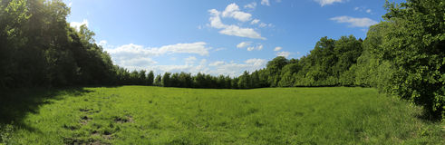 Meadow In The Woods Royalty Free Stock Images
