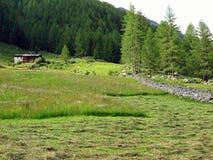 meadow wysokogórska Zdjęcia Royalty Free