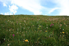 meadow wysokogórska Obrazy Stock