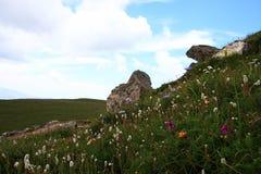 meadow wysokogórska Zdjęcia Stock