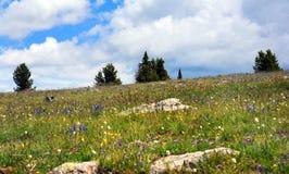 meadow wysokogórska Fotografia Royalty Free