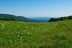 meadow wysokogórski rano Zdjęcie Stock