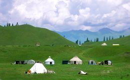 Meadow in Xinjiang-5 Royalty Free Stock Image