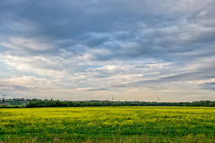 Meadow with yellow flowers and cloudy sky. Grass meadow with yellow flowers and cloudy sky Stock Photography