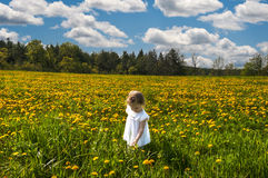 In a meadow of yellow flowers Royalty Free Stock Photo