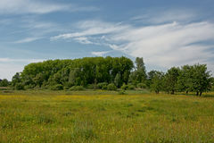 Meadow  with yellow flowers and green trees in Flanders Stock Images