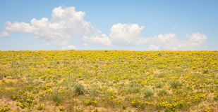 Meadow Of Yellow Wildflowers With Blue Cloudy Sky Background Stock Photos