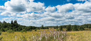 Meadow with yellow wildflowers near forest panoramic landscape Stock Photos