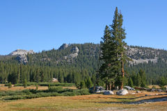 Meadow in Yosemite National Park, California, USA. Royalty Free Stock Images