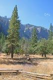 Meadow in Yosemite National Park, California, USA. Stock Image