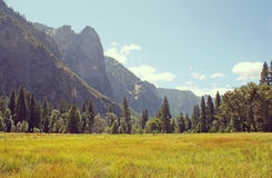Meadow in Yosemite National Park, California, USA. Royalty Free Stock Image