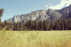 Meadow in Yosemite National Park, California, USA. Royalty Free Stock Photography