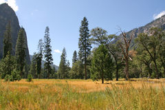 Meadow in Yosemite National Park, California, USA. Stock Photos