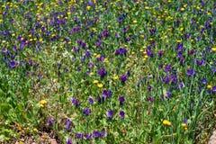 Wildflower meadow on Tenerife stock photo