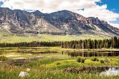 meadow zalewająca zdjęcie stock