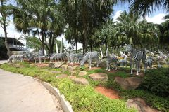 A meadow with zebras and grass and trees and stones in the Nong Nooch tropical botanic garden near Pattaya city in Thailand Royalty Free Stock Photography