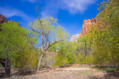 Meadow in Zion National Park Royalty Free Stock Photos