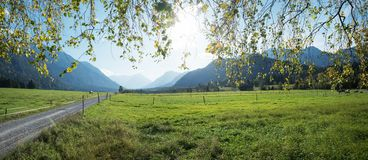Meadowland at loisach valley, beautiful spring landscape bavaria. View through green birch branches Stock Photos