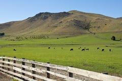 Meadowland vicino a twizel Fotografia Stock
