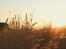 Meadowlands Stock Afbeelding
