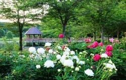Meadowlark Botanical Gardens Virginia Royalty-vrije Stock Fotografie