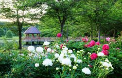 Meadowlark Botanical Gardens Virginia Royalty Free Stock Photography