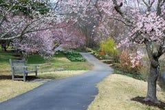 Meadowlark Regional Park Garden Pathway Virginia. A pedestrian walkway runs through spring gardens and blossoming cherry trees at Meadowlark Regional Park in Royalty Free Stock Photo