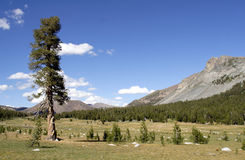 Meadows. Tuolumne Meadows in Yosemite National Park stock images