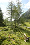 Meadows in the alps Royalty Free Stock Photo