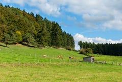 Meadows beneath the Winterkopf Stock Images