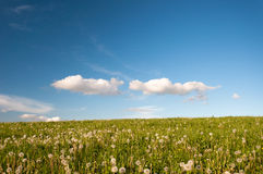 Meadows clouds and dandelions Royalty Free Stock Image