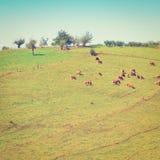 Meadows Stock Image